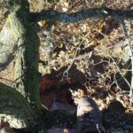 View from the top of an oak